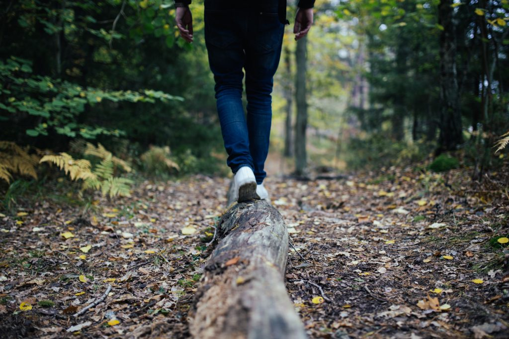 Person walking on top of fallen tree on a forest trail